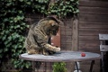 Картинка кошка, кот, малина, лапа, раскраска, столик