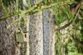 Картинка деревья, природа, домик