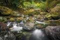 Картинка лес, природа, река, камни, мох