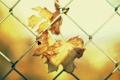 Картинка солнце, забор, листья, обои, листочек, фон, сетка