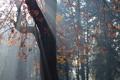 Картинка листья, свет, природа, дерево