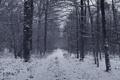 Картинка зима, лес, снег, деревья, Природа