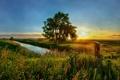 Картинка лето, трава, солнце, закат, природа, река, дерево