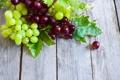Картинка листья, красный, зеленый, виноград