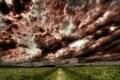 Картинка дорога, поле, небо, трава, деревья, цветы, фото
