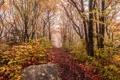 Картинка осень, лес, туман, камень, тропинка