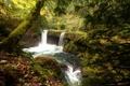 Картинка осень, листья, деревья, ветки, парк, ручей, камни