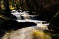 Картинка каскад, лес, река, поток