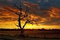 Картинка дорога, пейзаж, закат, дерево