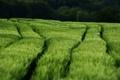 Картинка поле, трава, природа, фото, ветер, поля
