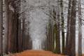 Картинка иней, осень, листья, деревья, парк, аллея