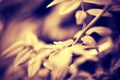 Картинка листья, макро, ветки, природа, сепия, macro