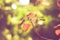 Картинка листья, цвета, природа, обои, яркие, ветка, размытость