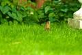 Картинка трава, кролик, лужайка