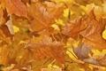 Картинка осень, листья, макро, краски, божья коровка, насекомое