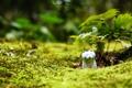 Картинка статуэтка, зелень, ростки, кошка