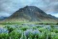 Картинка цветы, гора, долина