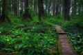 Картинка лес, природа, тропа