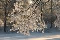 Картинка зима, ветка, обледенение