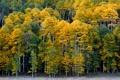 Картинка Риджуэй, лес, осень, деревья, Ridgway, Colorado, Колорадо
