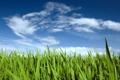 Картинка Nature, Clouds, Sky, Grass