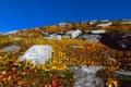 Картинка небо, листья, камни, растения, желтые, холм