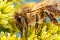 Картинка насекомое, пчела, боке, лепестки, цветы