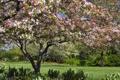 Картинка дерево, весна, Иллинойс, Illinois, цветение, Гленко, Glencoe