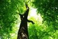 Картинка листья, зеленый, дерево, листва, ствол, ярко