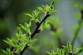 Картинка листья, деревья, Весна