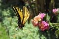 Картинка цветы, бабочка, мотылек