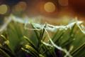 Картинка зелень, иголки, хвоя, паутинка