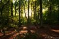 Картинка лес, лучи, деревья, листва, солнечные