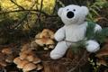 Картинка лес, белый, настроение, игрушка, грибы, мишка, пенек