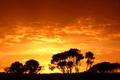 Картинка закат, силуэт, небо, деревья