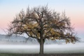Картинка осень, туман, дерево