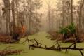 Картинка вода, деревья, заросли, болото, джунгли, сырость