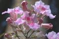 Картинка макро, природа, растение, куст, лепестки