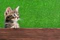 Картинка кошка, кот, взгляд, морда, лапа, когти, котёнок