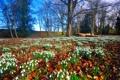 Картинка деревья, цветы, поляна, весна, подснежники