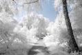Картинка дорога, белый, деревья, myINQI (devArt)