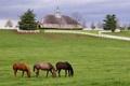 Картинка пейзаж, дом, забор, лошади, луг, усадьба