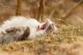 Картинка кошка, лето, природа