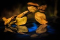 Картинка осень, листья, отражение, ветка