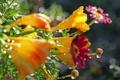 Картинка капли, макро, цветы, блеск