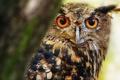 Картинка сова, птица, ветка
