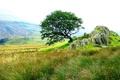 Картинка небо, трава, пейзаж, горы, камни, дерево, скалы