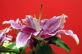 Картинка цветок, макро, цветы, flower, flowers, macro, Purple Beauty