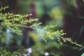 Картинка листья, макро, веточка, ветка