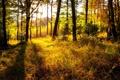 Картинка осень, лес, трава, природа, яркость